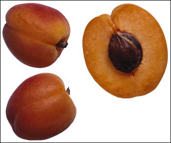 Apricot fruit cut open so that stone is visible