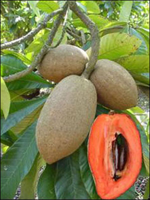 Mamey sapote fruit cut open