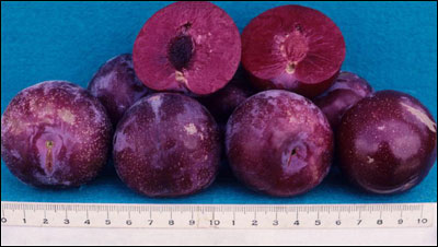 Plums with one cut open