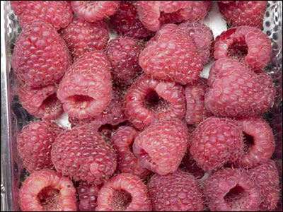 Picked raspberries showing their hollow core