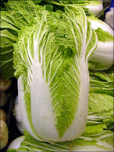 plant id vegetables  chinese cabbage