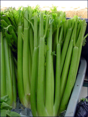 Edible stalks of celery