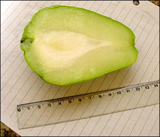 Fruit of chayote cut in half