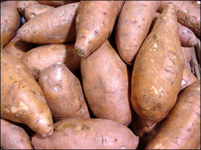 Sweet Potatoes Gardening Solutions