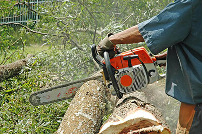 A chainsaw in action on a log