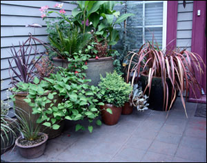 Container garden at entry of a home