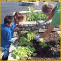 Master gardener helps students in raised bed