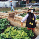 Raised bed gardens at Oakcrest with scarecrow